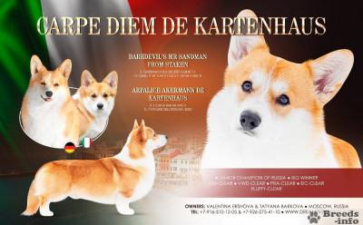 Питомник ENIGMAGRAND,предлагает щенка от красивой пары
