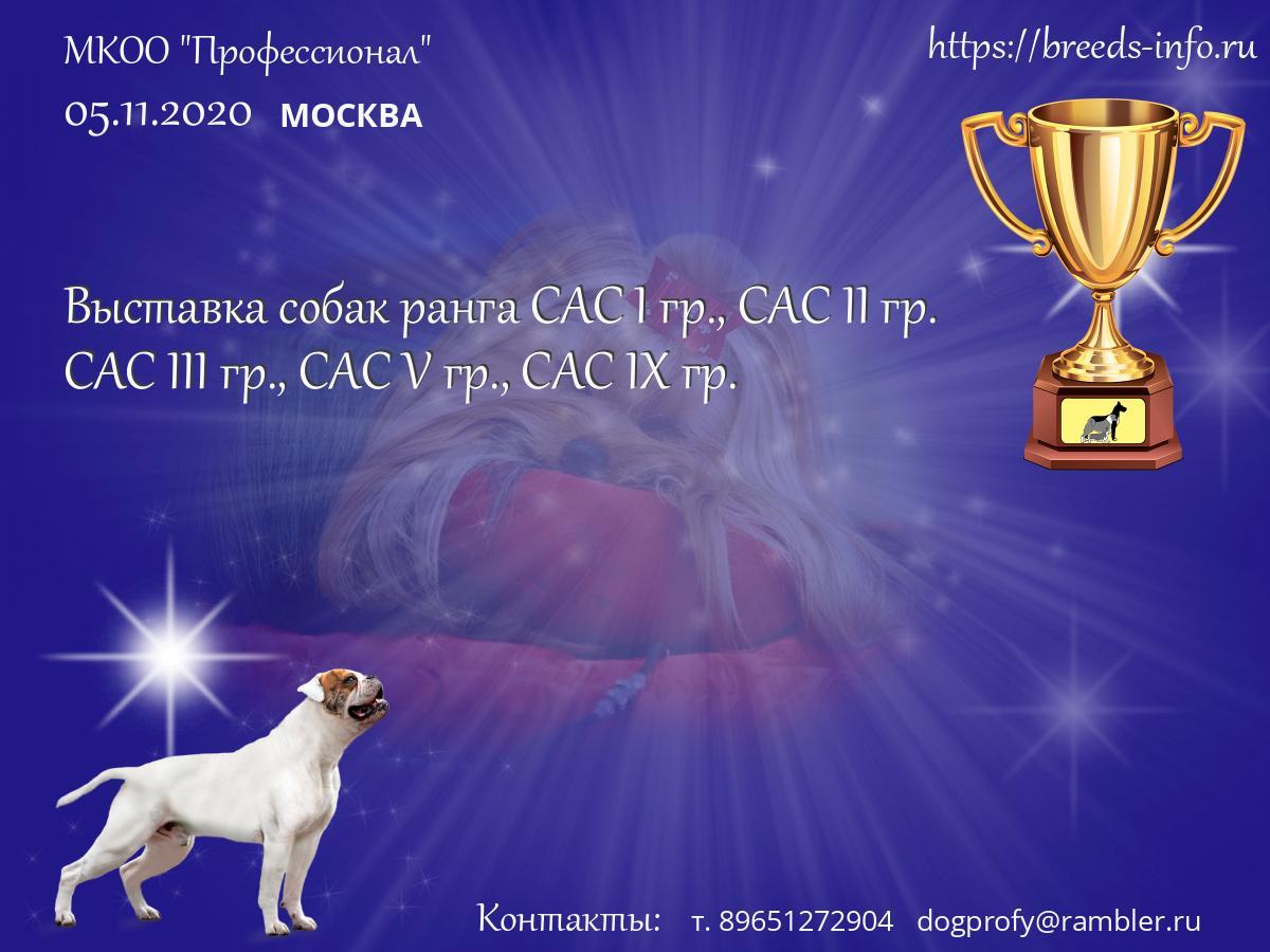 кинологический клуб профессионал москва