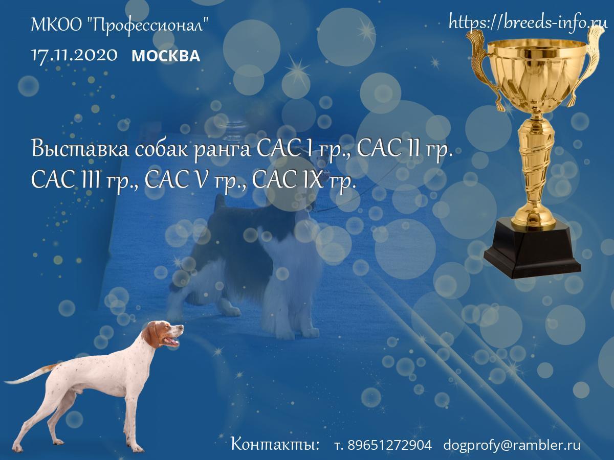 Кинологический клуб профессионал москва world gym клубы в москве