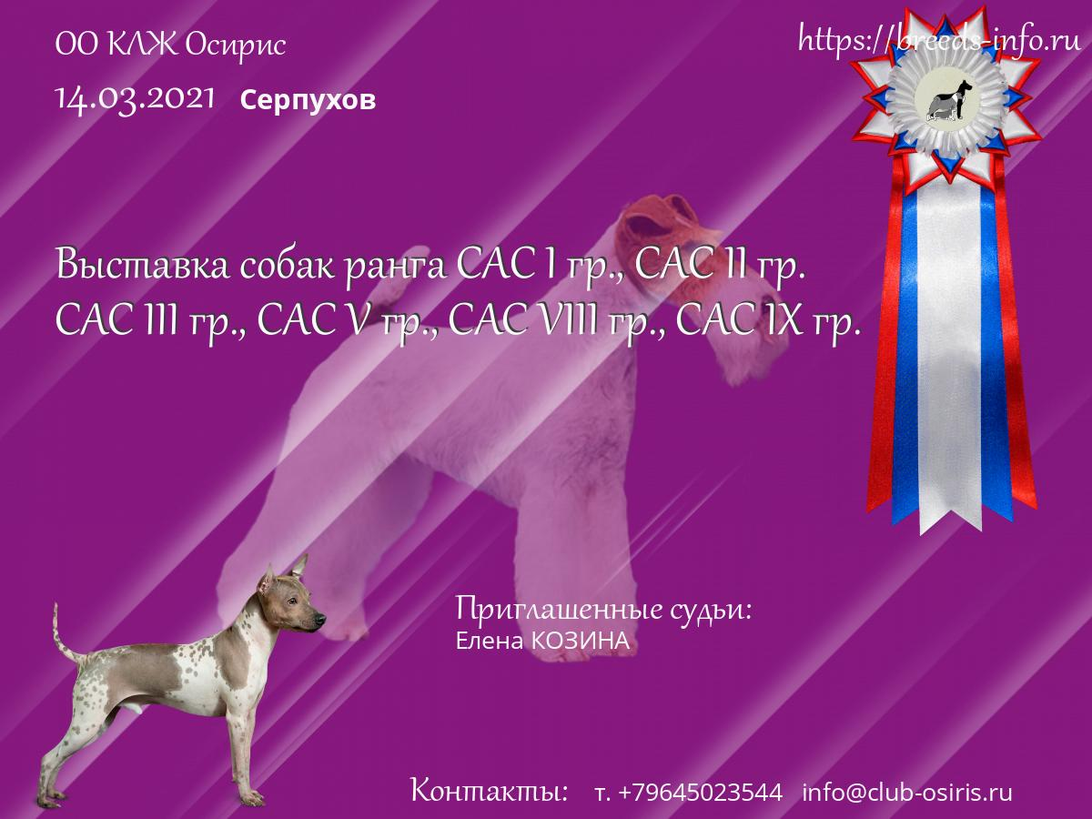 Клуб собака москва большая полянка москва клуб