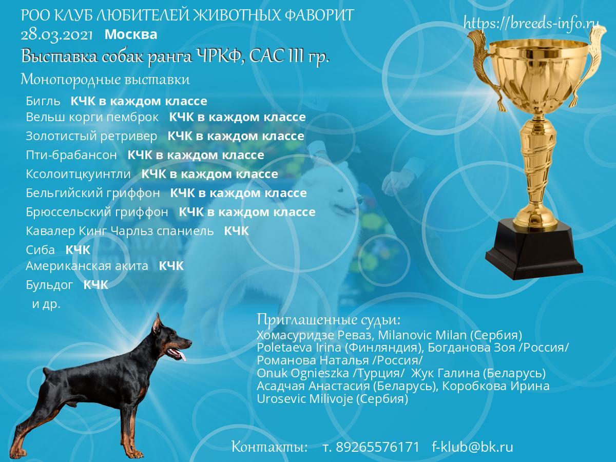 Клуб собака москва обои на телефон динамо москва хоккейный клуб