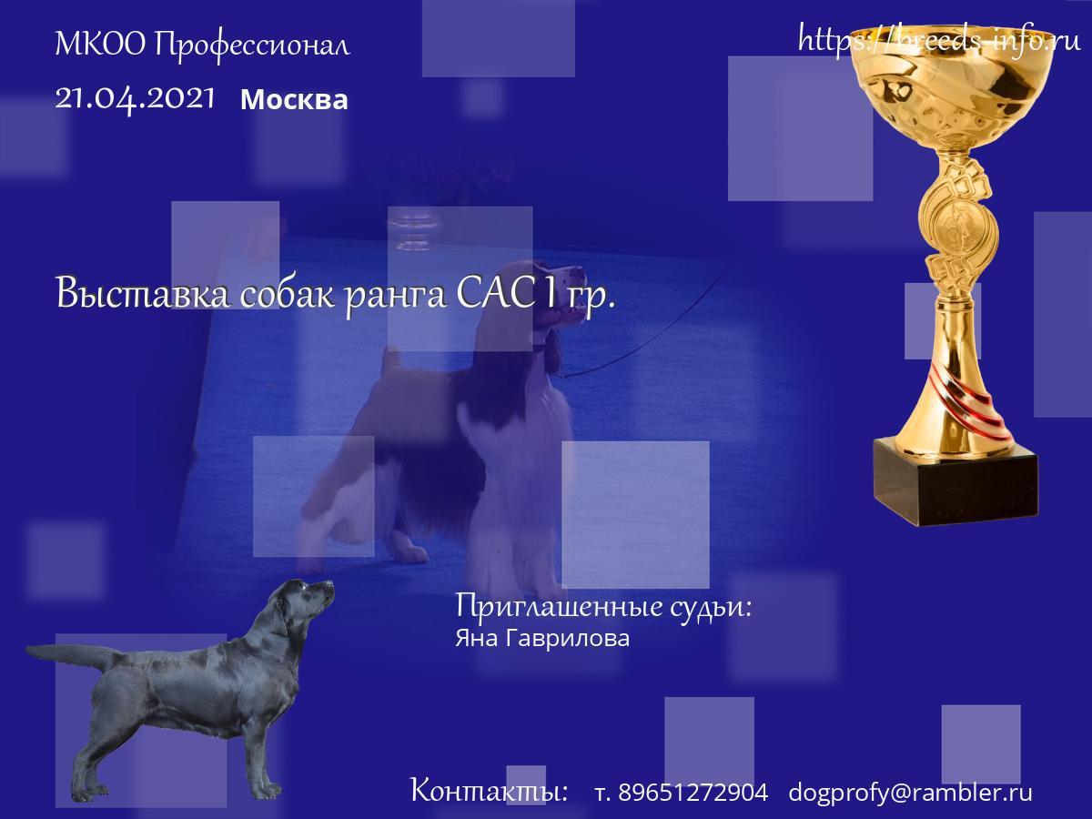 Кинологический клуб профессионал москва electro клубы москвы