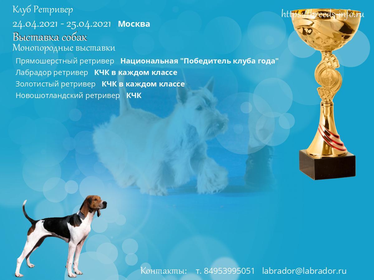 Ретривер клуб москва адрес клуб распутин москва фото