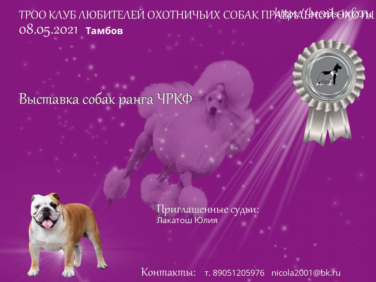 Охотничьи клубы для собак в москве строгино мужской клуб массаж