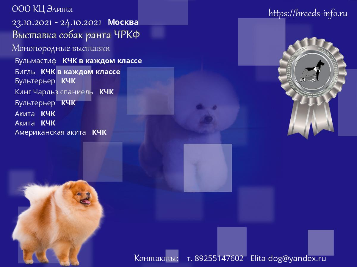 Клуб элита москва выставки топ ночной клуб мира