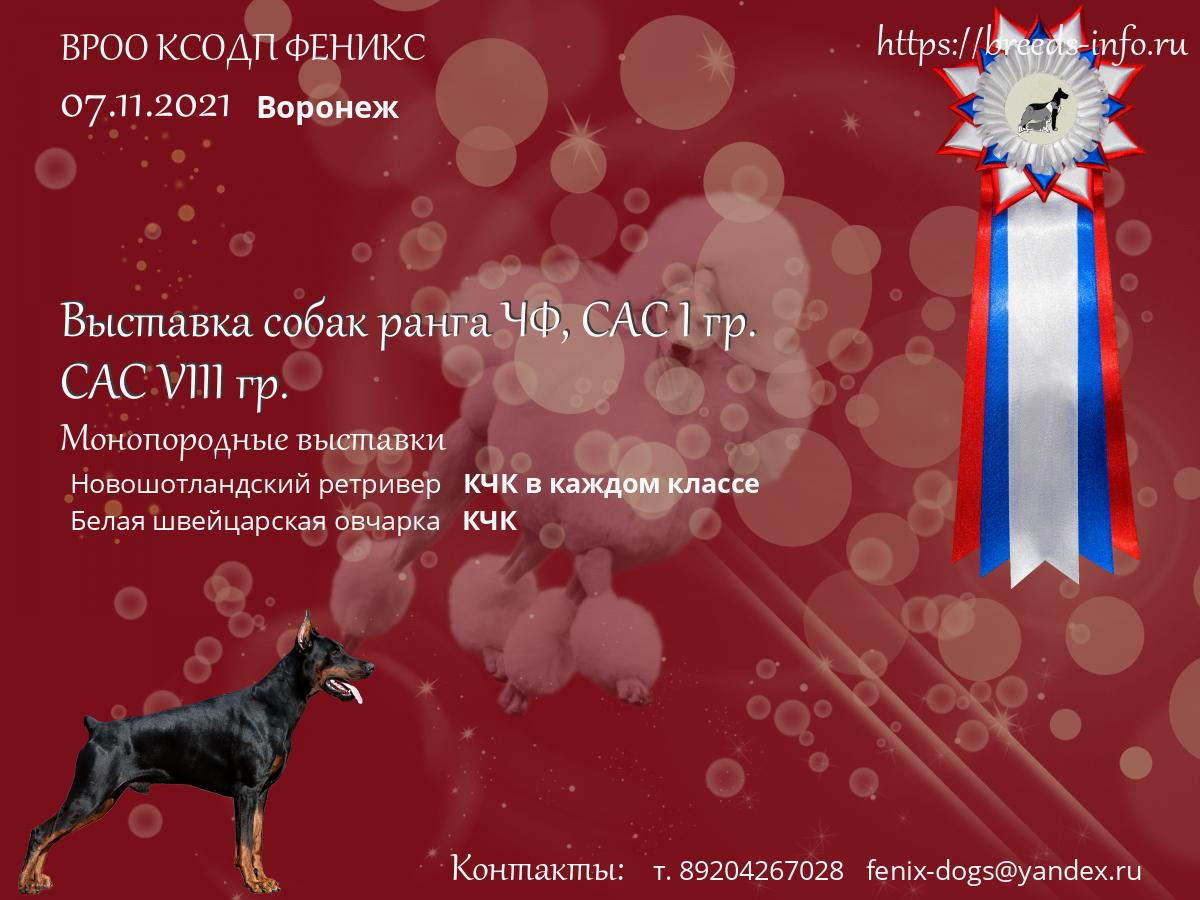 Клуб собак в москве феникс ночной клуб в черниковке в уфе